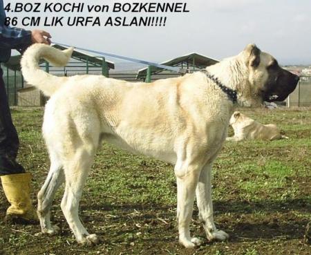 KOCHERO_1.jpg