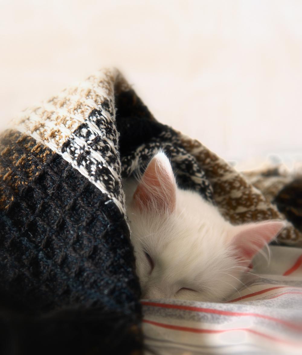 Sleeping kitty! Great blog, right?
