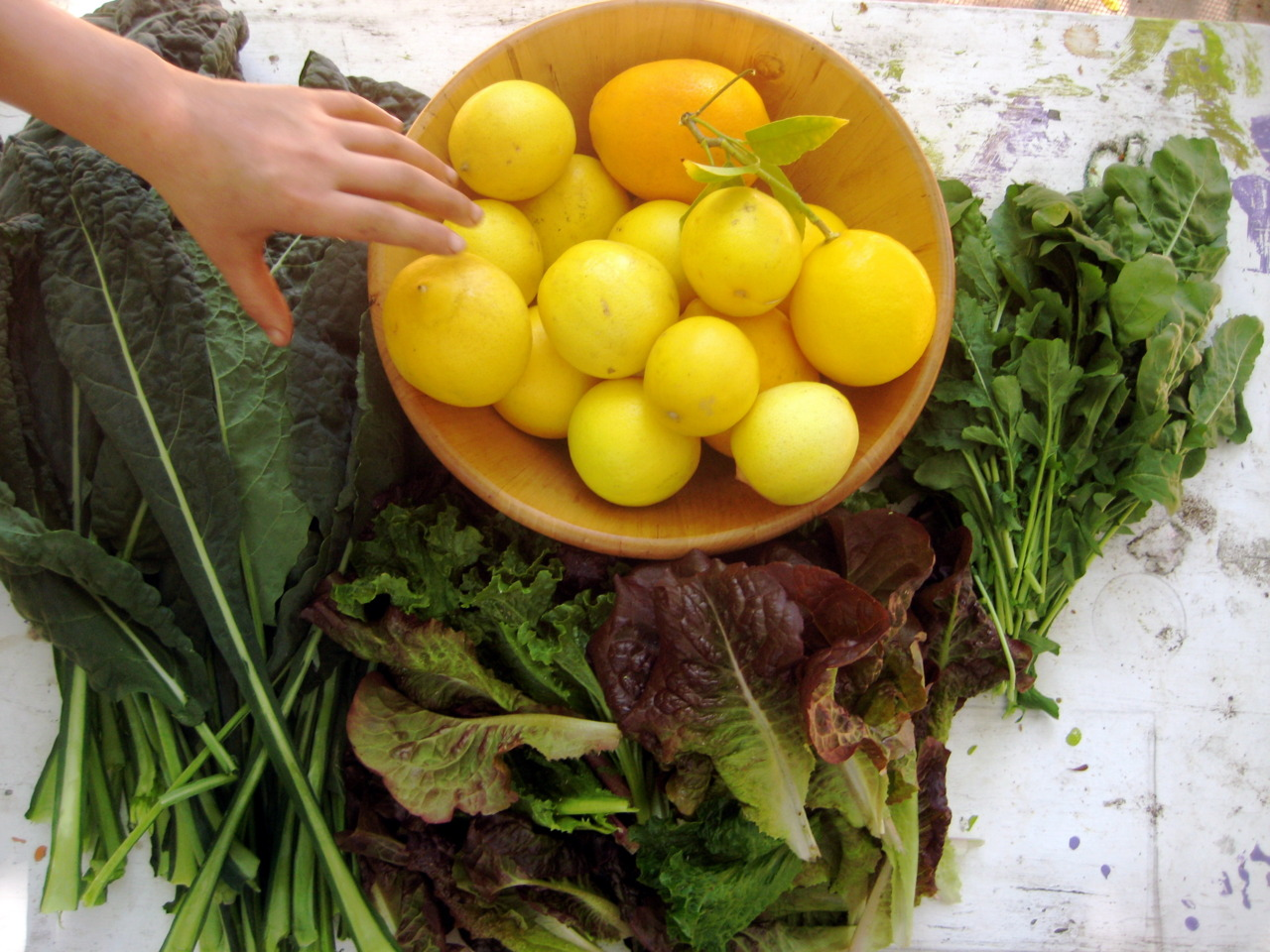 ediblegardensla: Harvesting kale, wild arugula, lettuce and lemons in a garden in Outpost Canyon.