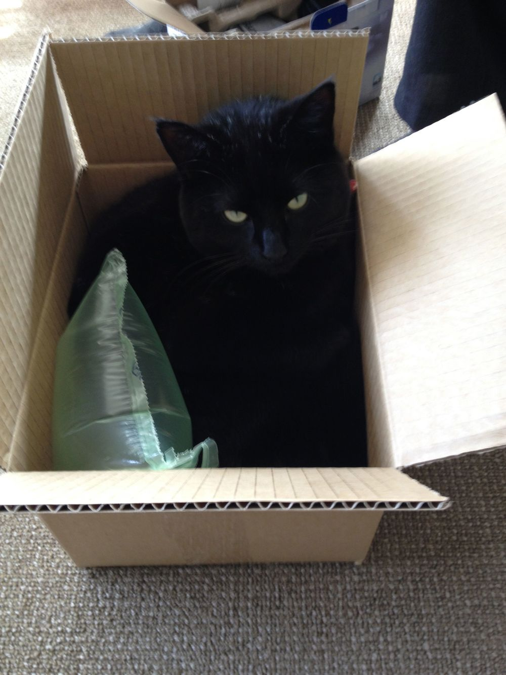 Rosie in a box.jpg