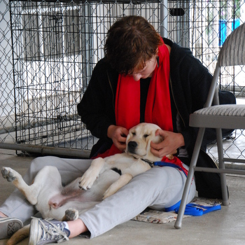 Opal getting a massage from puppy raiser Rachael