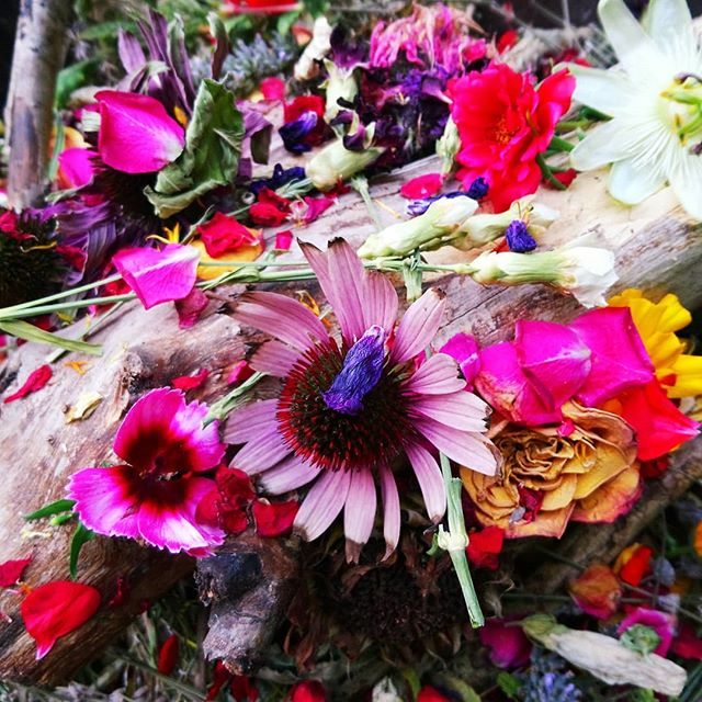 #NewMoon in #Virgo #fire. An extra special fire to welcome my new neice, baby Lani, into the world. It contained Bay, Rosemary, Lavendar, Echinacea, Hibiscus, Geranium, Carnations, Sunflower heads, Calendula, Rose, Mugwort, Lemon Balm, Honeysuckle berries, Passionflower, Dianthus, and some small pieces of Palo Santo. Lit just before 19.01, the exact time of the new moon ❤️ #congratulations  #ceremony #fireceremony #herbs #homegrown #garden #hampshire