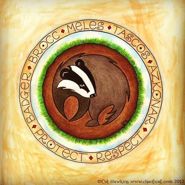 It's National Badger Day!  #nationalbadgerday #lovebadgers #badger #badgerbadgerbadger #protect #respect #artbycathawkins