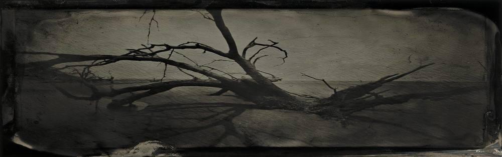 boneyard beach ossabaw by S. Gayle Stevens_Cirque de Shreve_Friends of the Algur Meadows Museum Benefit.jpg