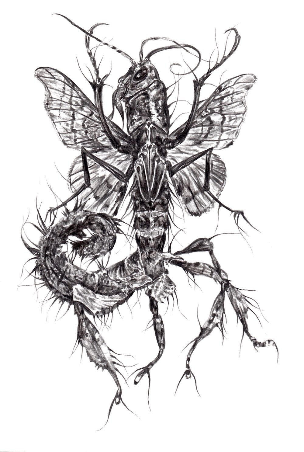 """Madness Unmasked (Rhopafera Scorpionoidea Gemæded)"" Pencil on Terraskin."