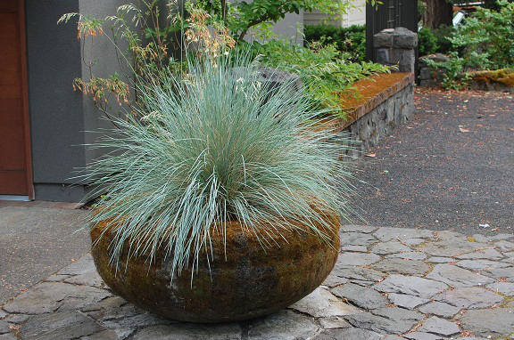Antique pot with blue fescue. This simple element sets the tone for a garden in Lake Oswego.