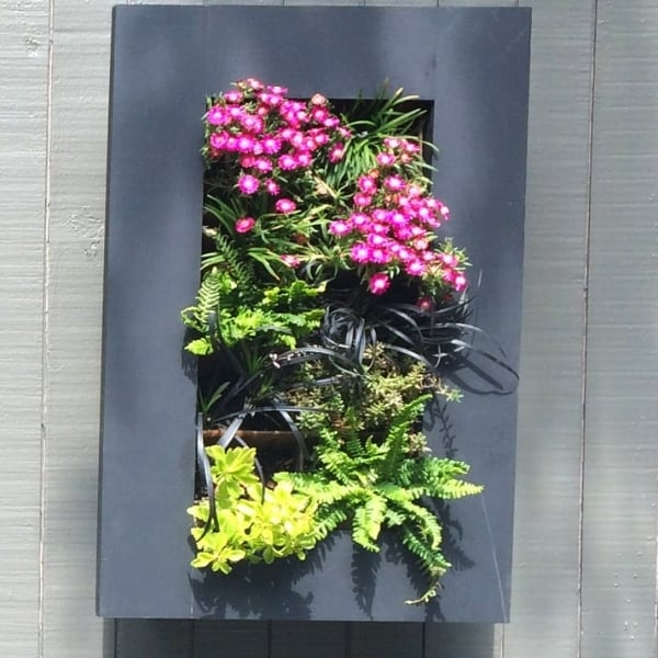 living picture frame with succulents