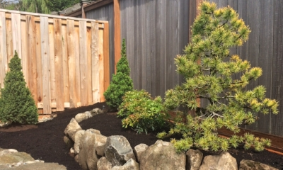 low care conifers pdx