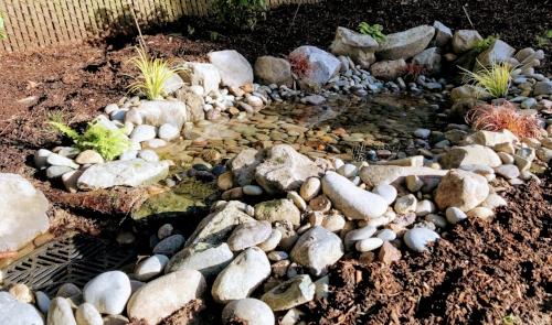 rain garden we designed