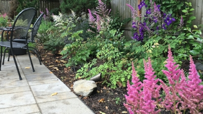 astilbe in a ross nw watergardens design