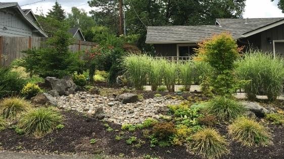 Front yard rain garden.