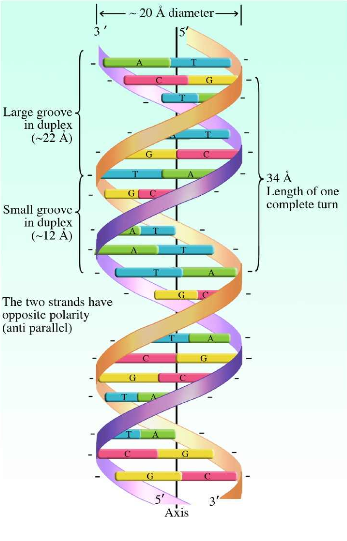 dna picture 1.PNG