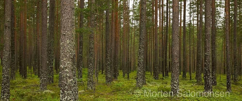 L1003959-MortenSalomonsen.jpg