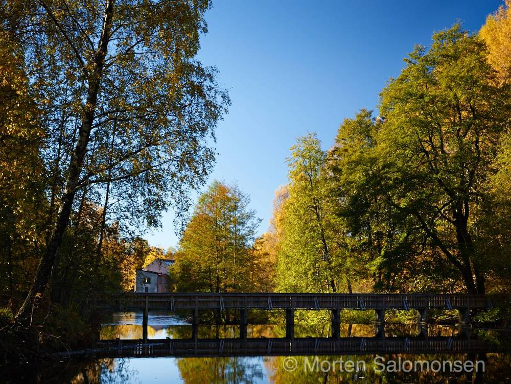 CF001080-MortenSalomonsen.jpg