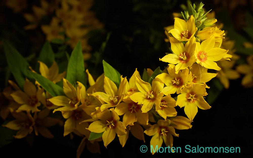 Flowers flashback