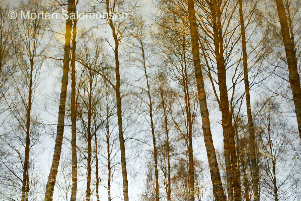 Mirror image, trees reflections