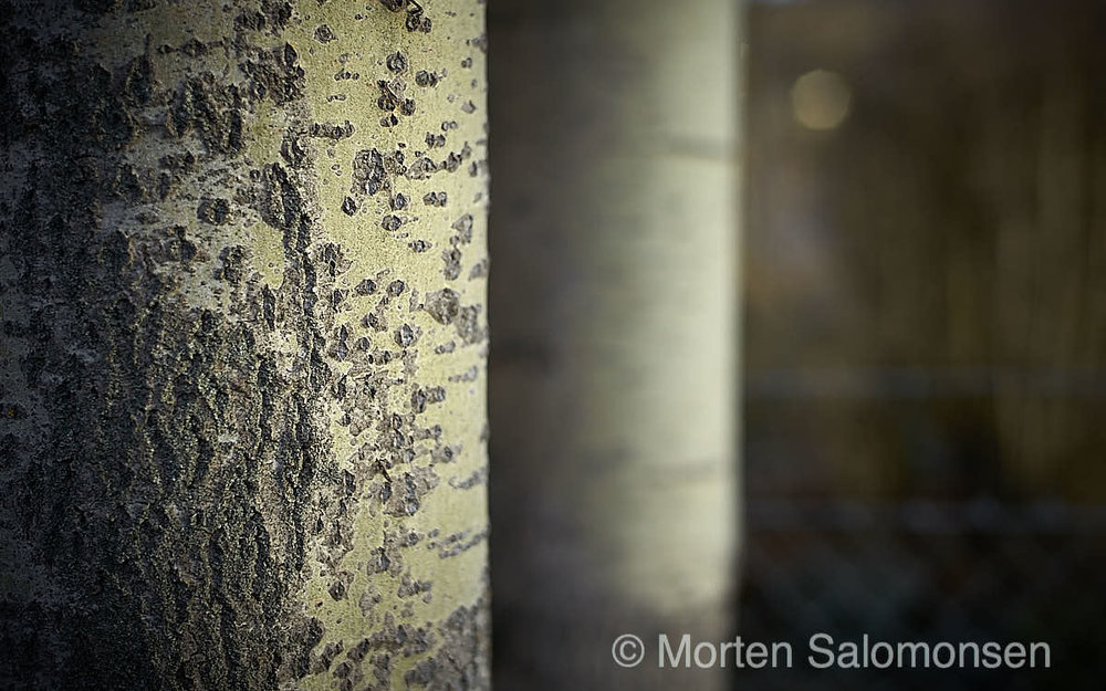 M2406371-v2-Q20-MortenSalomonsen.jpg
