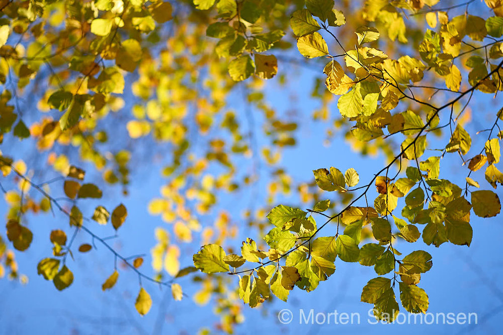 """Autumn Leaves""  (1/1500 s @ f/2.8, 75mm, ISO 400)"