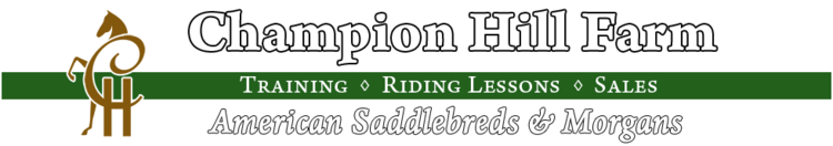 Champion Hill Farm - American Saddlebred & Morgan Horses - Training, Riding Lessons & Sales