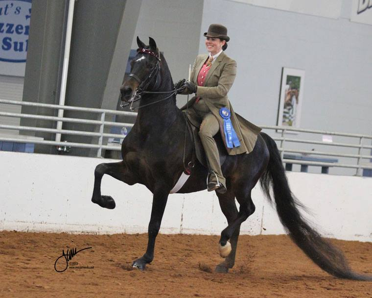 PLK Perfect Timing in his show ring debut! Congratulations to new owner Lisa Cramer on her selection of this fine gelding.