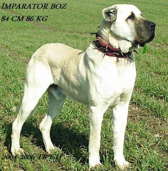 Emperator, foundation dog