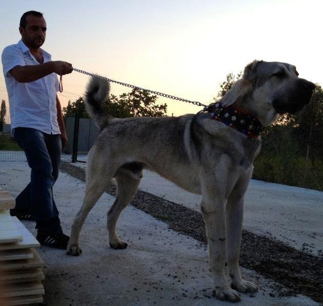 Salas's son with Duman 14 mths