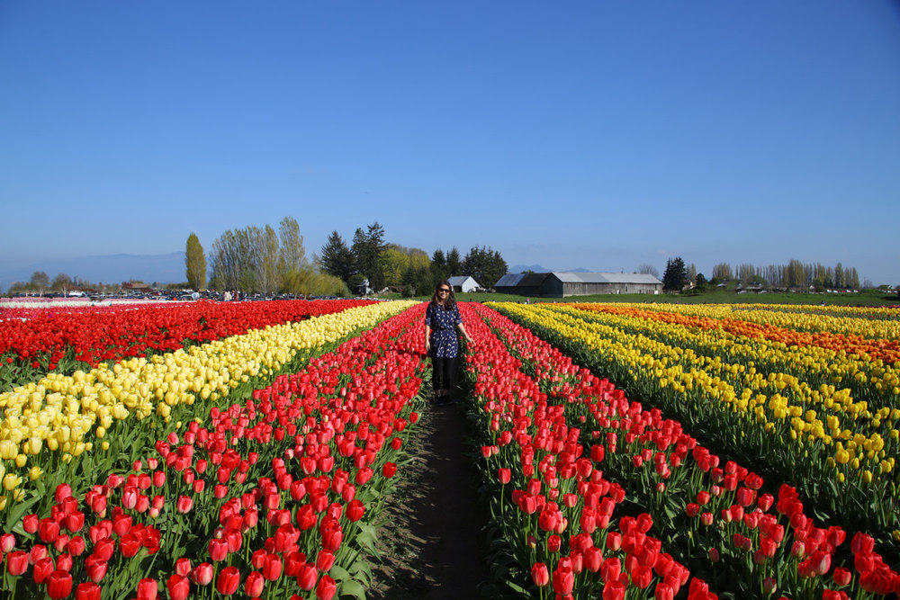 1604_TulipTown_2.jpg