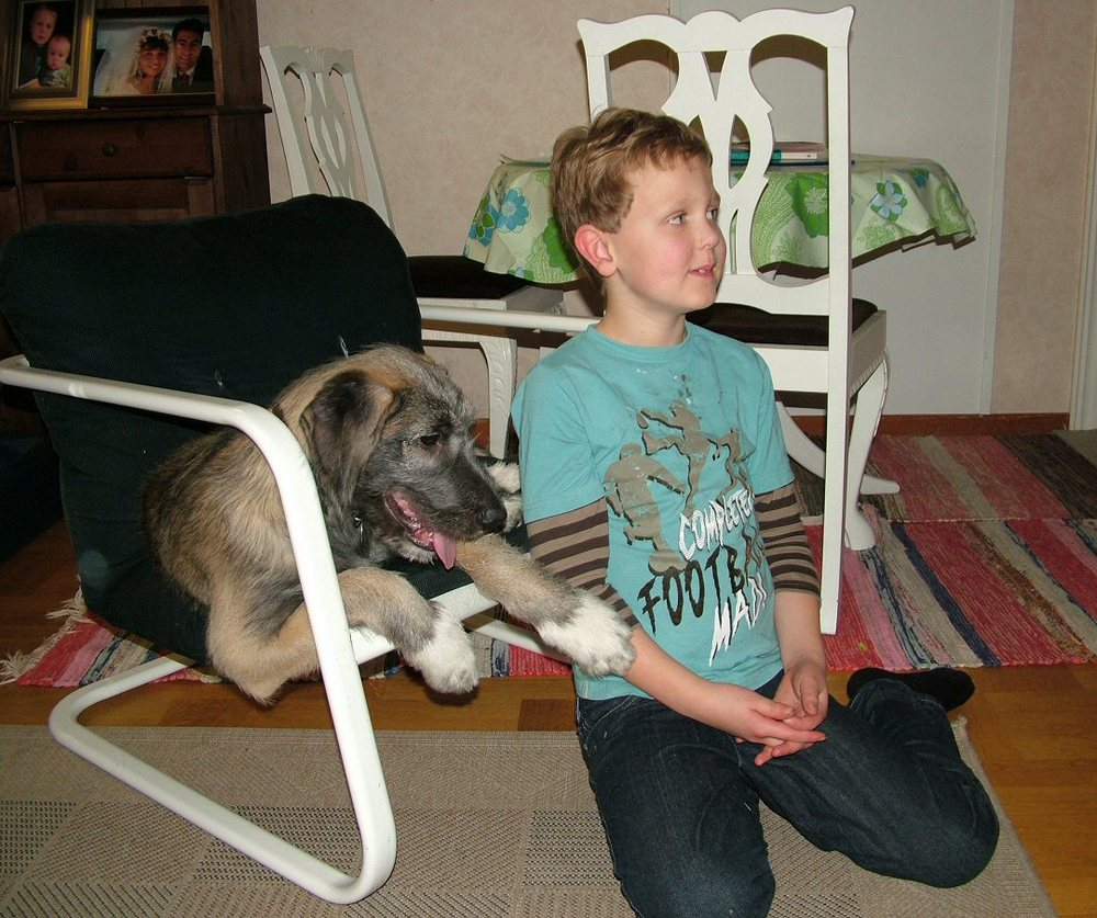 Rare Large Dog Breeds Rare Large Dog Breeds Top
