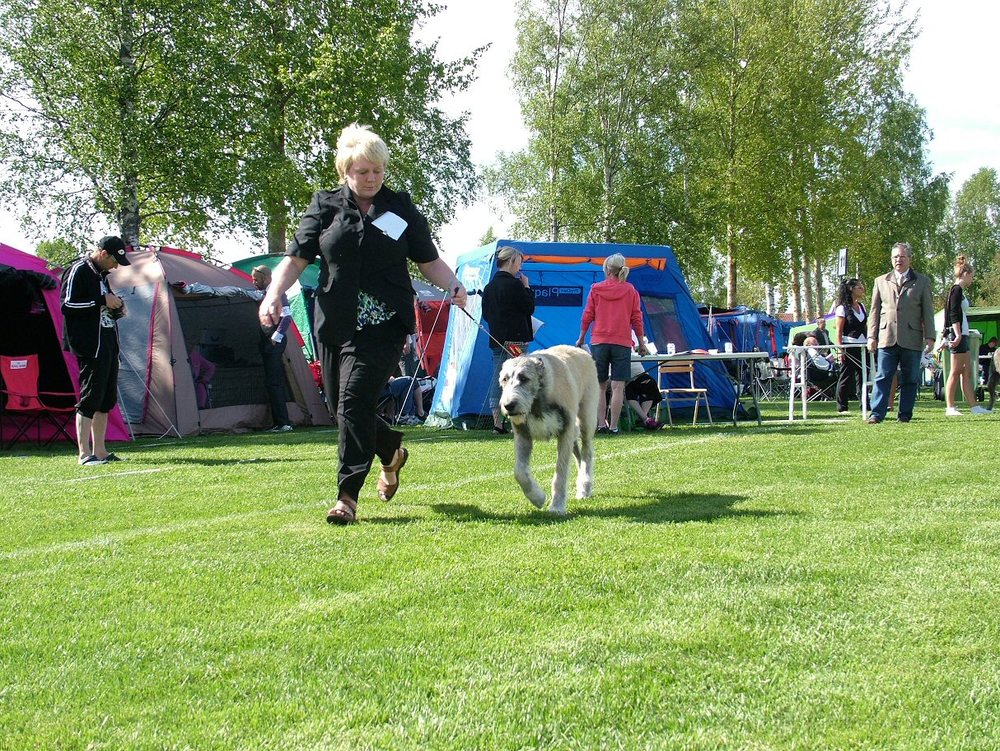Suzanne running Ellie in the Show Ring