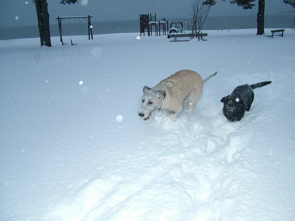 Ellie and Wilma love running in the snow