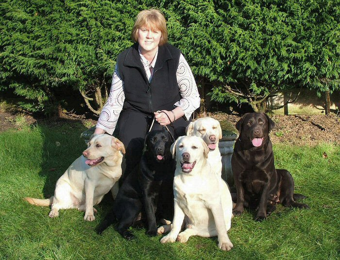 Suz sat with our Labradors