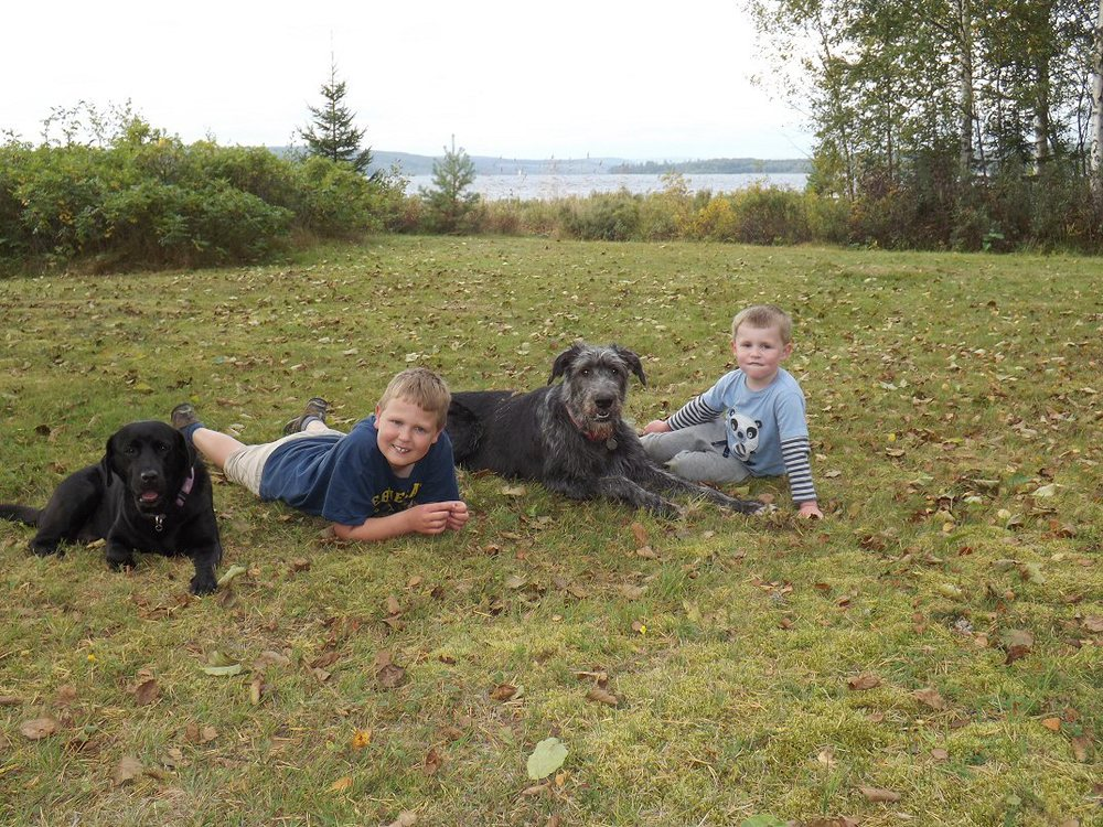 The boys with Daisy and Wilma at Falludden.