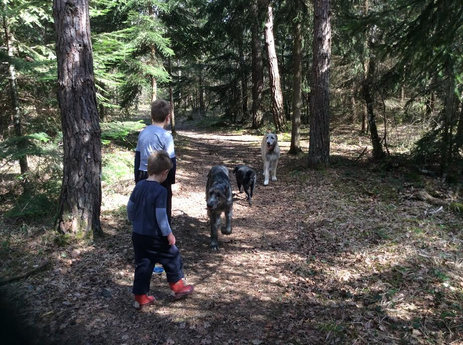 April 2014 Boys and dogs walking in the woods