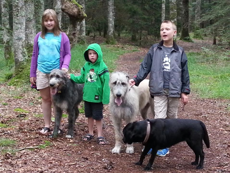 Children and dogs enjoying a walk in the woods July 2014