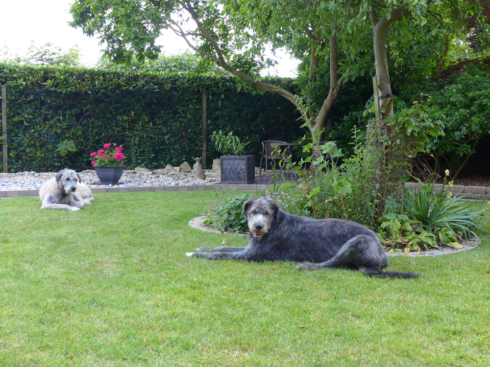 The dogs relaxing in the garden, under the shade of a tree after having a bath.