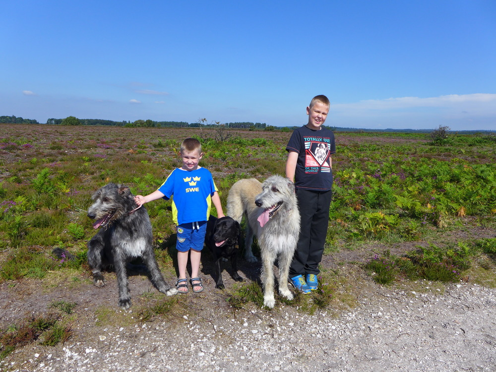 The children and dogs love the New Forest walks