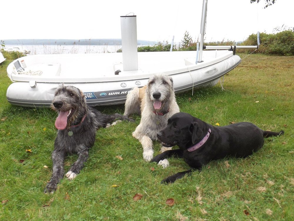 Wolfies and Wilma near the sail boat 3.jpg