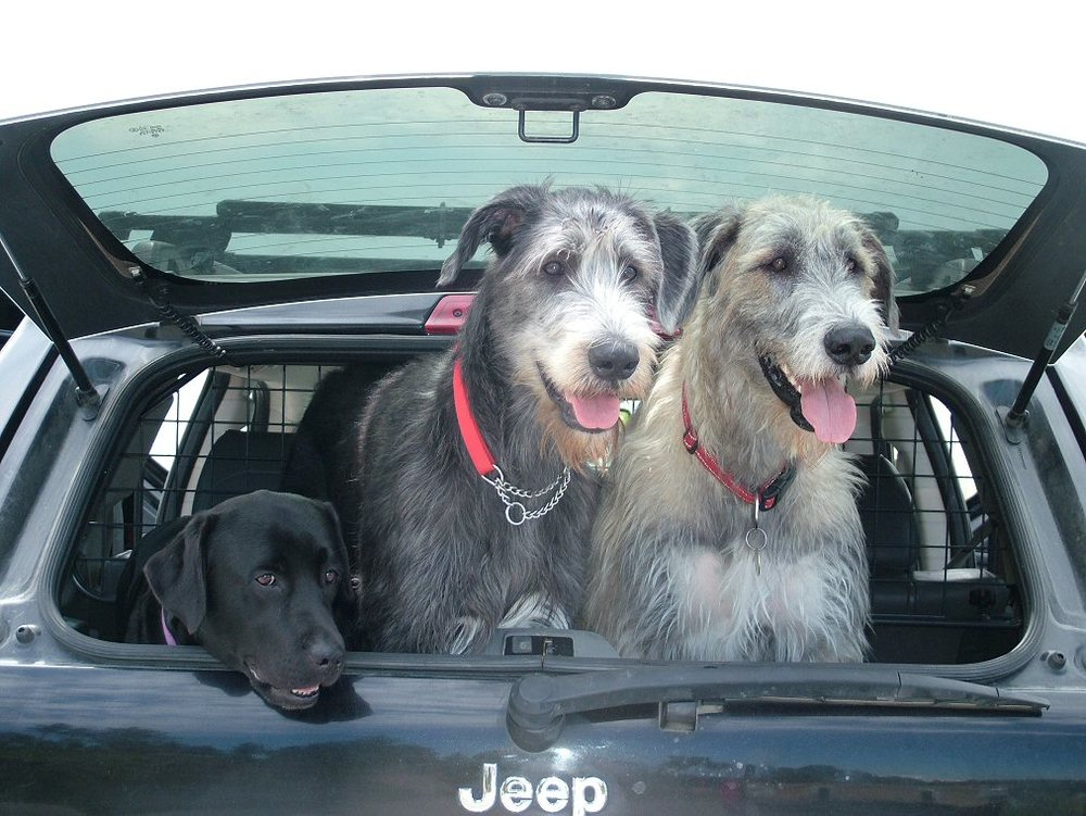 2 Wilma, Daisy & Ellie in the back of the Jeep.jpg