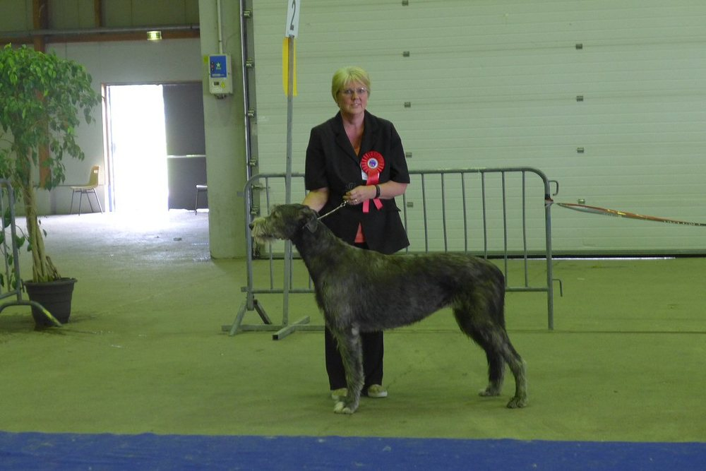 Daisy waiting to go in for the Hound Group judging.