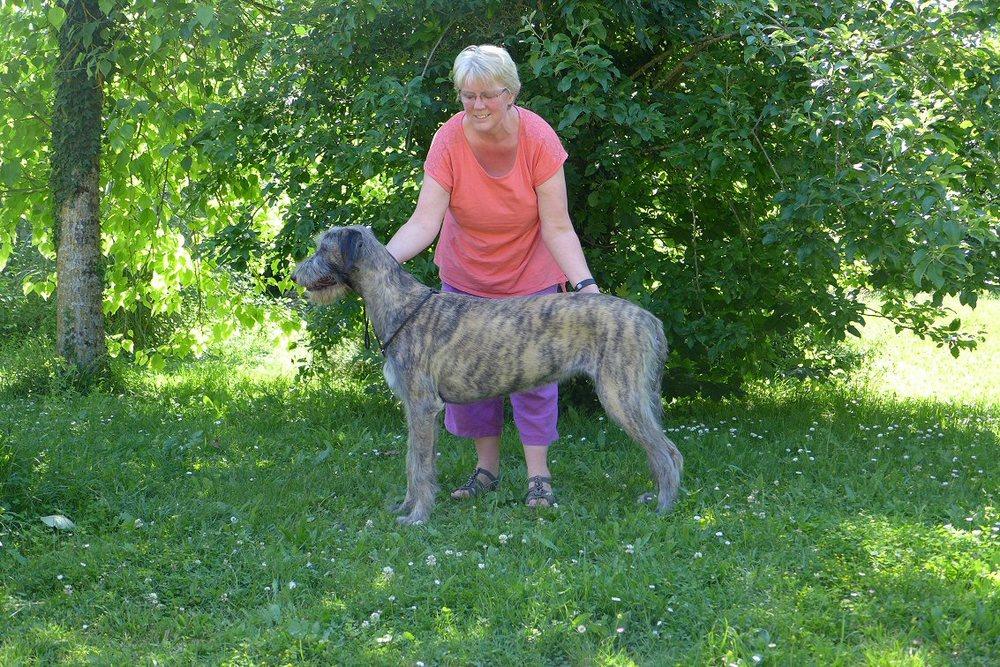 Tilly won Best Puppy bitch.