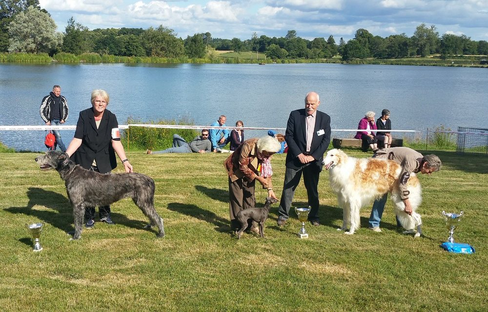 Here is Daisy winning her cup in the Group judging.