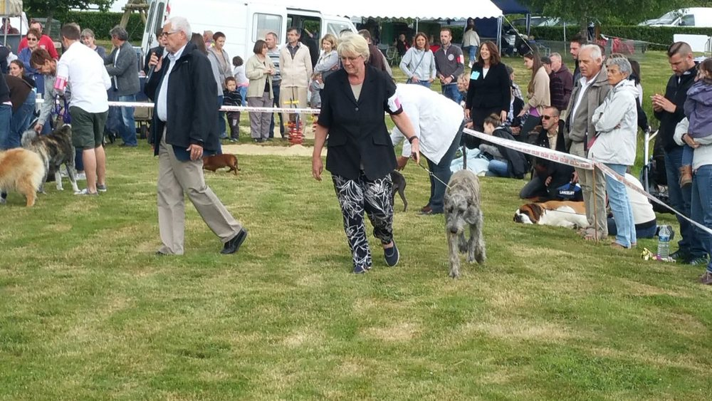 "Here is Tilly, Xaliburs O""Tilly having won Best Puppy in Breed in the Best puppy in show ring judging."