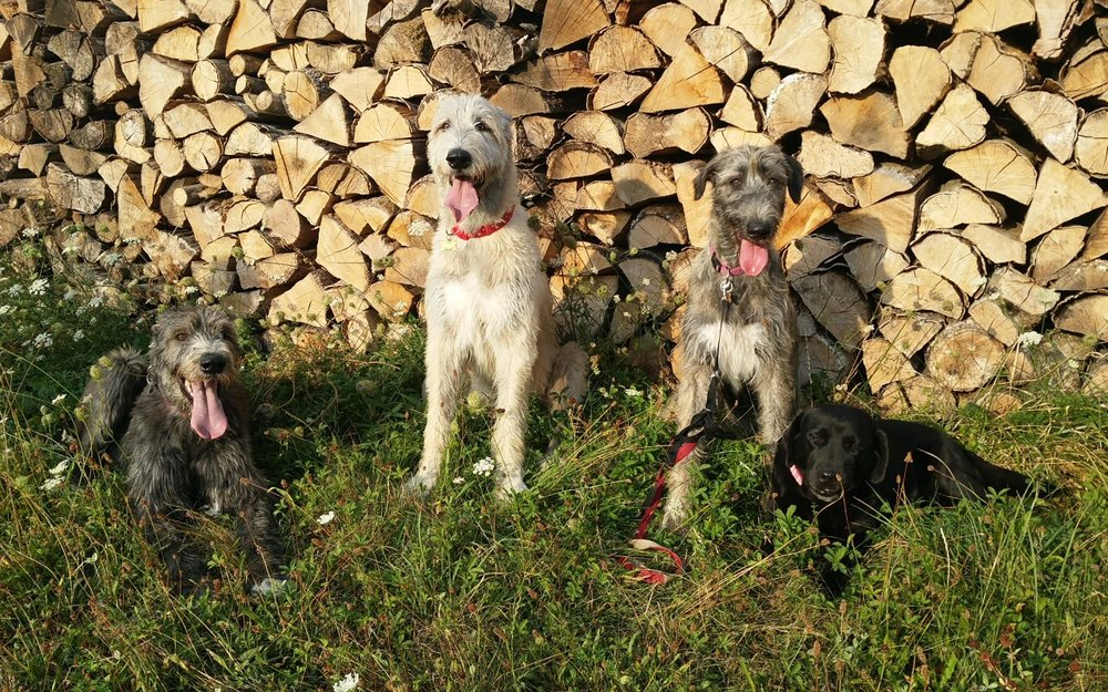 woofs at the woodpile.jpg