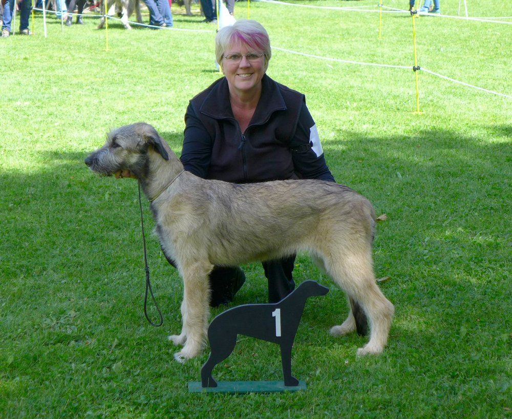 RALIE Irish Wolfhound club of France championship show 14th May 2017,Xaliburs Quite Spicy wins Best Puppy in Show under judge Mrs Csilla Juhasz (Hungary)