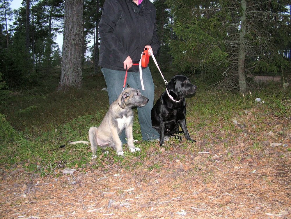 Wilma and ellie in Gullvik beach woods.jpg