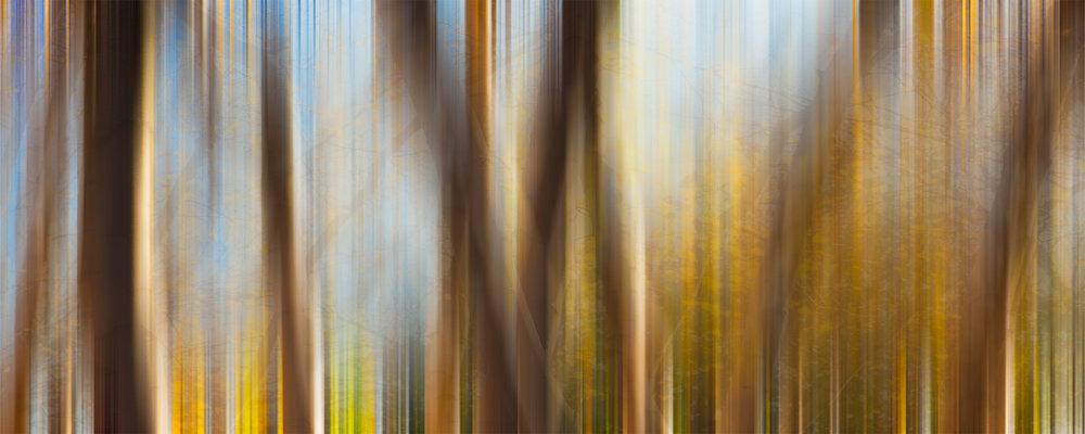 Muddy Forest