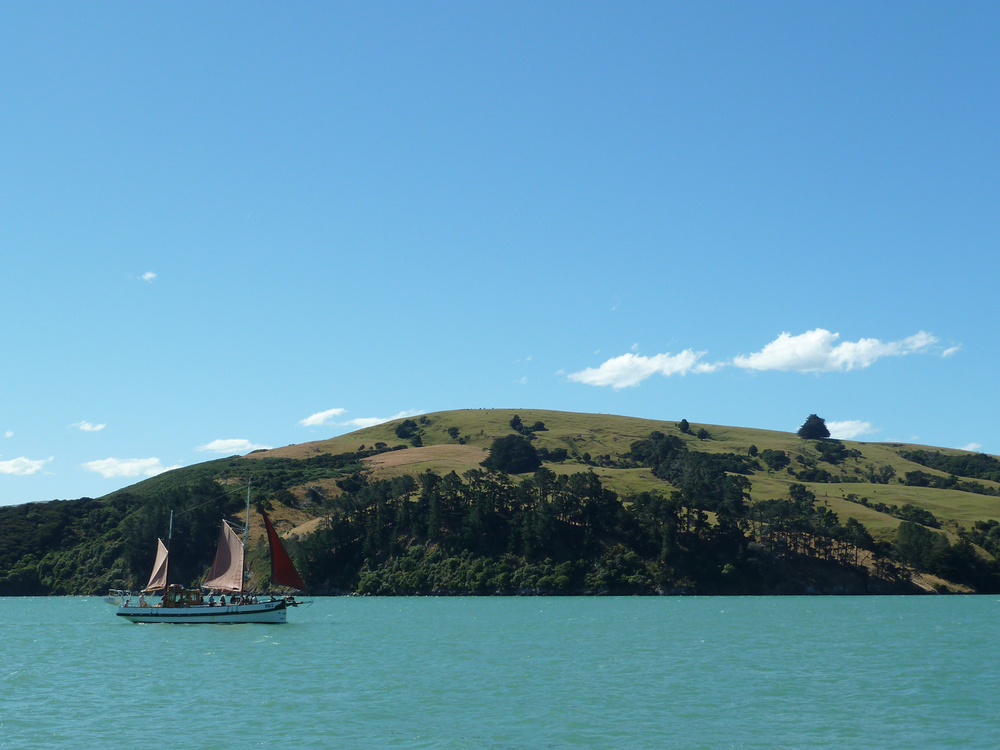 A Sailboat In Akaroa