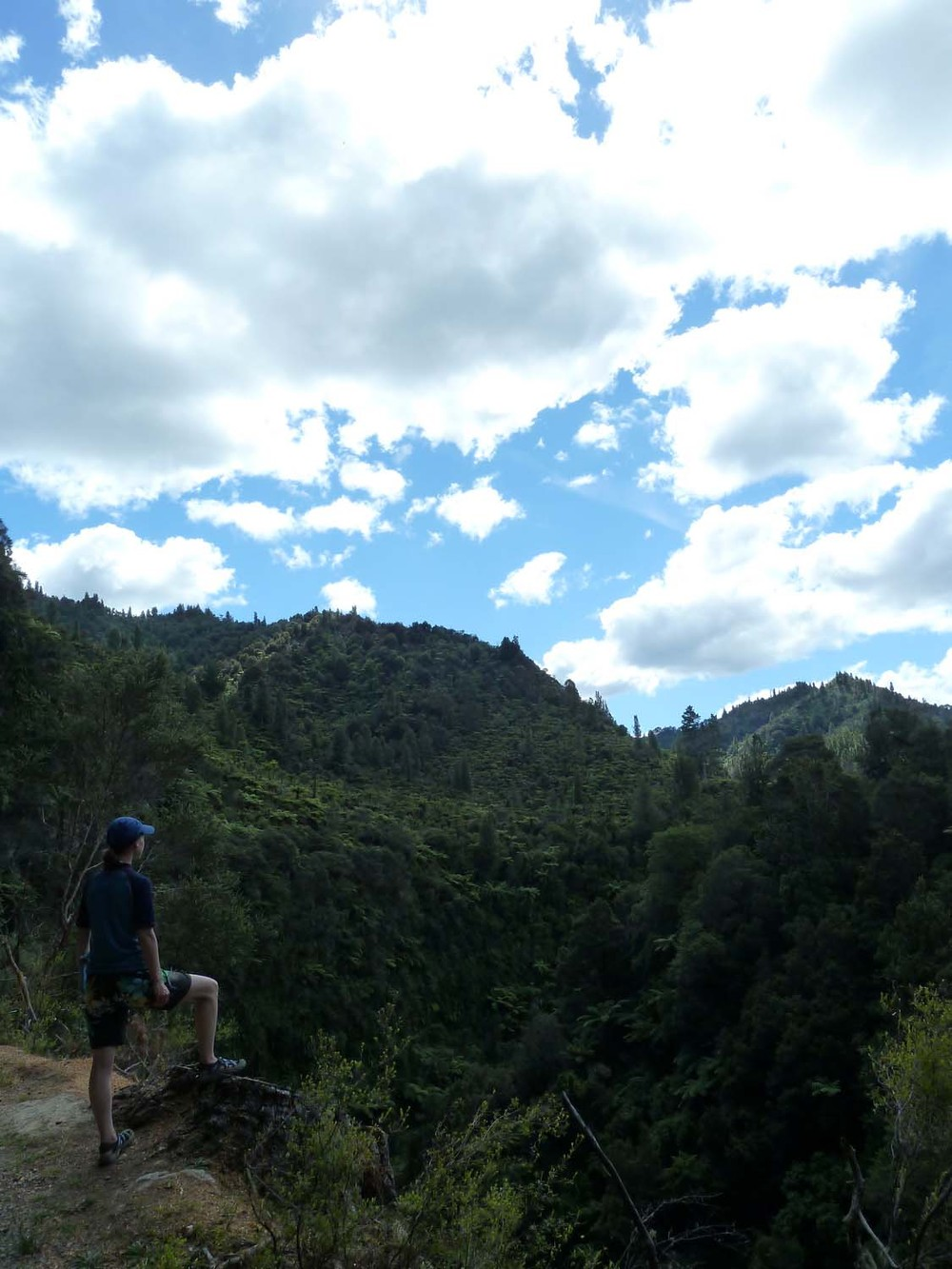 Hiking Above Whanganui