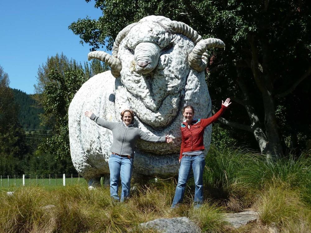 Giant Sheep!