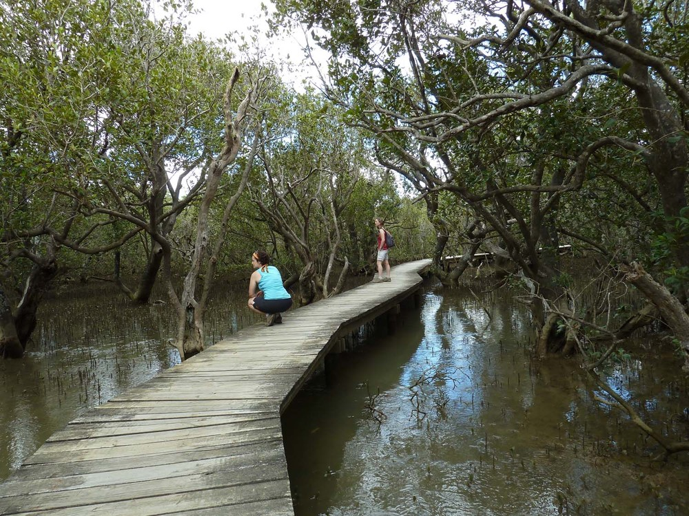 The Mangrove Forest